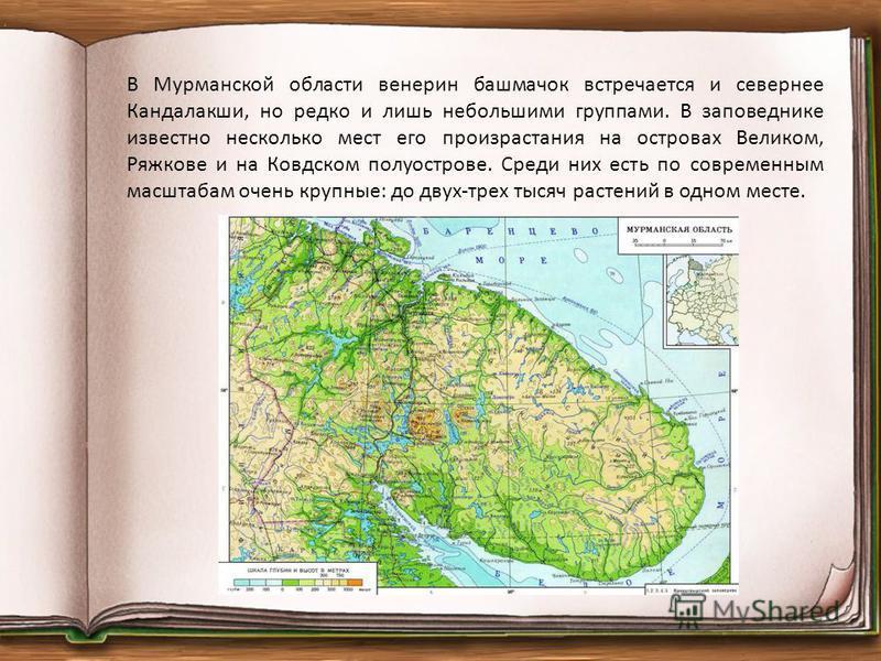 В Мурманской области венерин башмачок встречается и севернее Кандалакши, но редко и лишь небольшими группами. В заповеднике известно несколько мест его произрастания на островах Великом, Ряжкове и на Ковдском полуострове. Среди них есть по современны