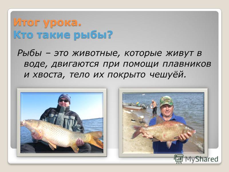 Итог урока. Кто такие рыбы? Рыбы – это животные, которые живут в воде, двигаются при помощи плавников и хвоста, тело их покрыто чешуёй.