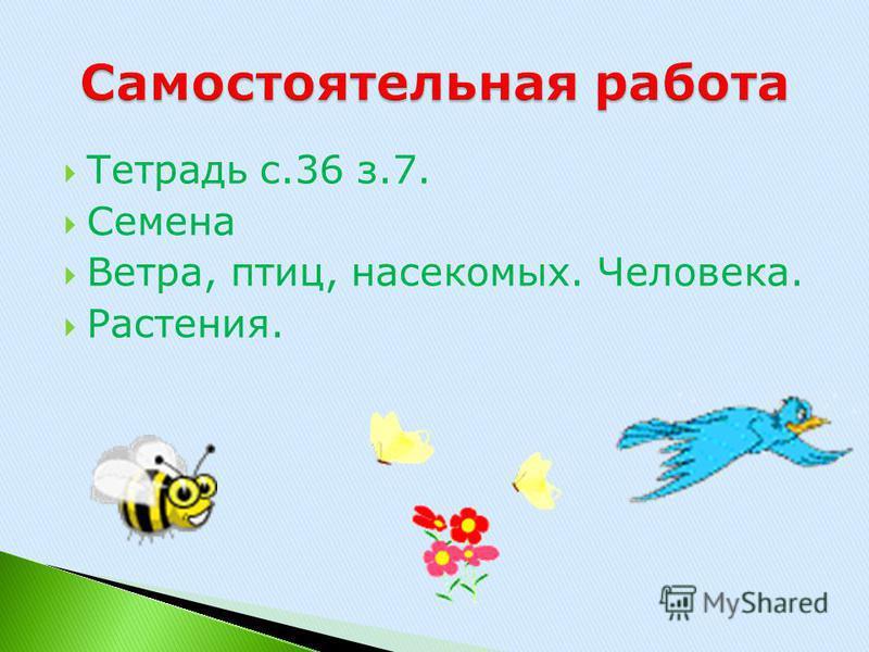 Тетрадь с.36 з.7. Семена Ветра, птиц, насекомых. Человека. Растения.