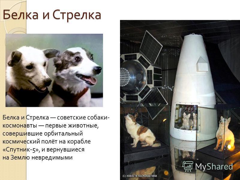 Белка и Стрелка Белка и Стрелка Белка и Стрелка советские собаки - космонавты первые животные, совершившие орбитальный космический полёт на корабле « Спутник -5», и вернувшиеся на Землю невредимыми