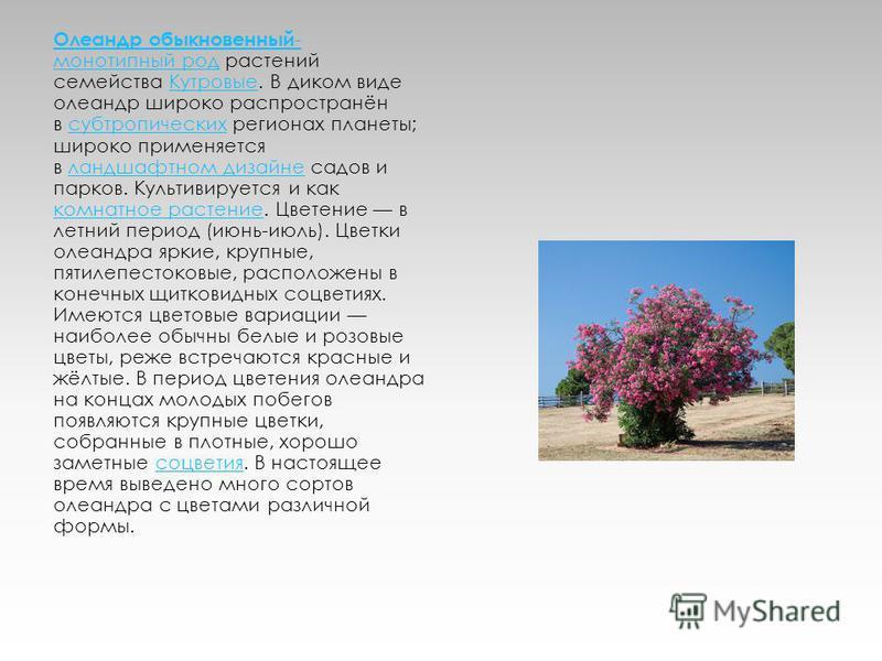 Олеандр обыкновенный - монотипный род Олеандр обыкновенный - монотипный род растений семейства Кутровые. В диком виде олеандр широко распространён в субтропических регионах планеты; широко применяется в ландшафтном дизайне садов и парков. Культивируе