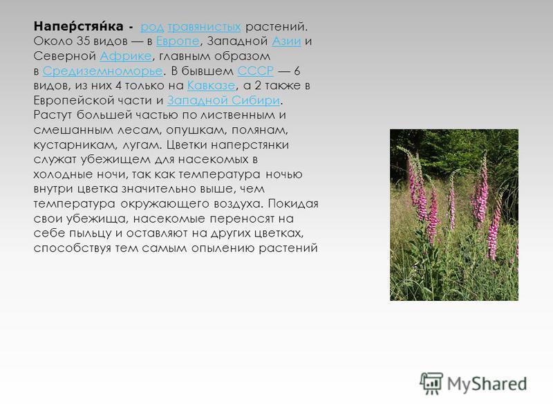 Наперстянка - род травянистых растений. Около 35 видов в Европе, Западной Азии и Северной Африке, главным образом в Средиземноморье. В бывшем СССР 6 видов, из них 4 только на Кавказе, а 2 также в Европейской части и Западной Сибири.род травянистых Ев