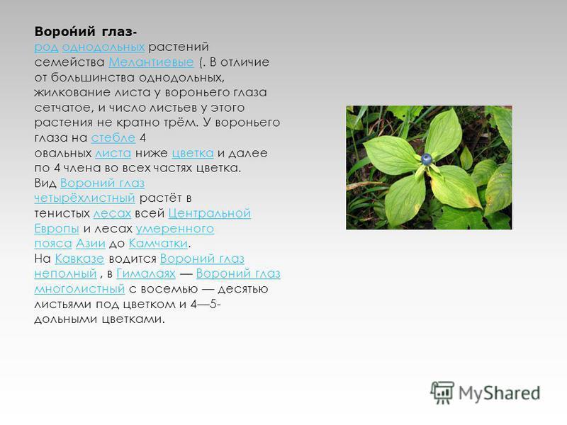Вороний глаз- род однодольных растений семейства Мелантиевые (. В отличие от большинства однодольных, жилкование листа у вороньего глаза сетчатое, и число листьев у этого растения не кратно трём. У вороньего глаза на стебле 4 овальных листа ниже цвет