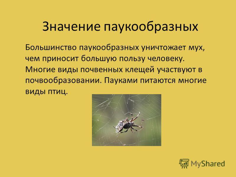 Большинство паукообразных уничтожает мух, чем приносит большую пользу человеку. Многие виды почвенных клещей участвуют в почвообразовании. Пауками питаются многие виды птиц. Значение паукообразных