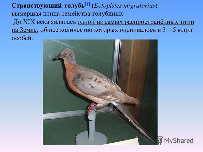 Странствующий голубь [1] (Ectopistes migratorius) вымершая птица семейства голубиных. [1] До XIX века являлась одной из самых распространённых птиц на Земле, общее количество которых оценивалось в 35 млрд особей.