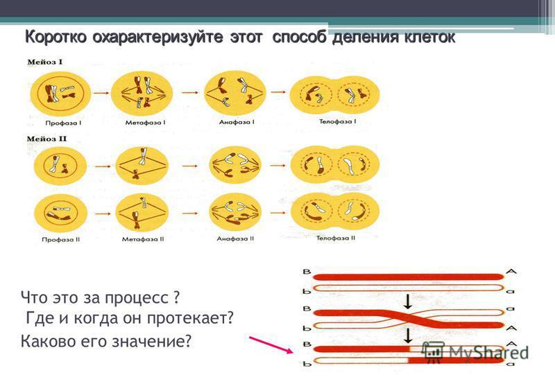 Что это за процесс ? Где и когда он протекает? Каково его значение? Коротко охарактеризуйте этот способ деления клеток