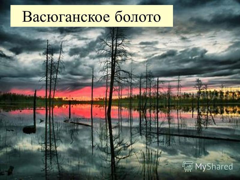 Васюганское болото