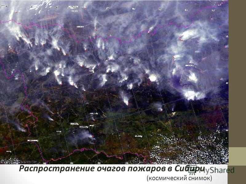 Распространение очагов пожаров в Сибири (космический снимок)