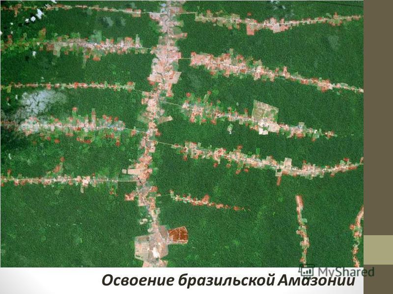 Освоение бразильской Амазонии
