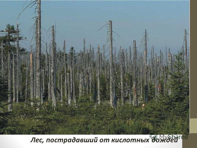 Лес, пострадавший от кислотных дождей