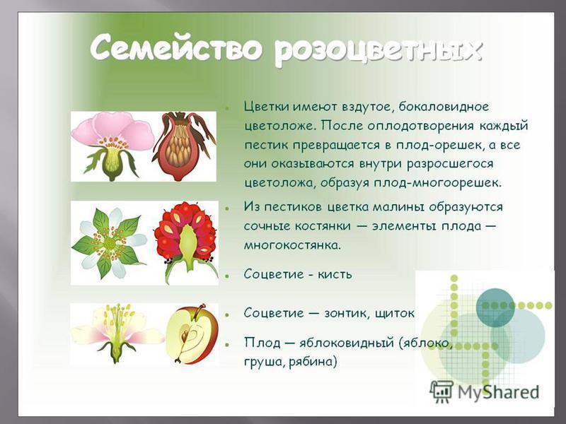 травы от всех видов паразитов