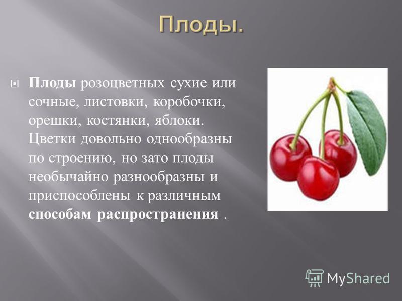 Плоды розоцветных сухие или сочные, листовки, коробочки, орешки, костянки, яблоки. Цветки довольно однообразны по строению, но зато плоды необычайно разнообразны и приспособлены к различным способам распространения.