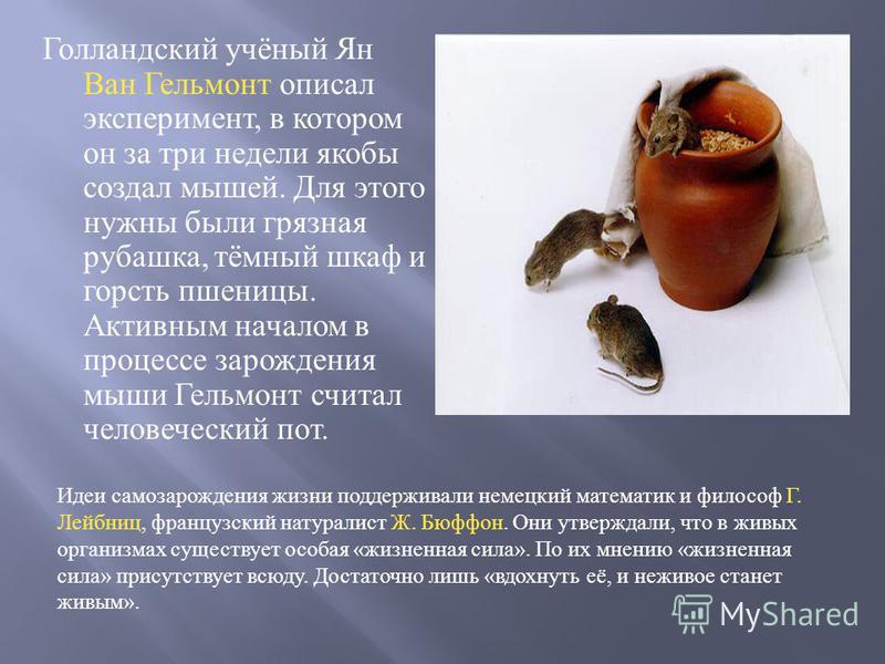 Голландский учёный Ян Ван Гельмонт описал эксперимент, в котором он за три недели якобы создал мышей. Для этого нужны были грязная рубашка, тёмный шкаф и горсть пшеницы. Активным началом в процессе зарождения мыши Гельмонт считал человеческий пот. Ид