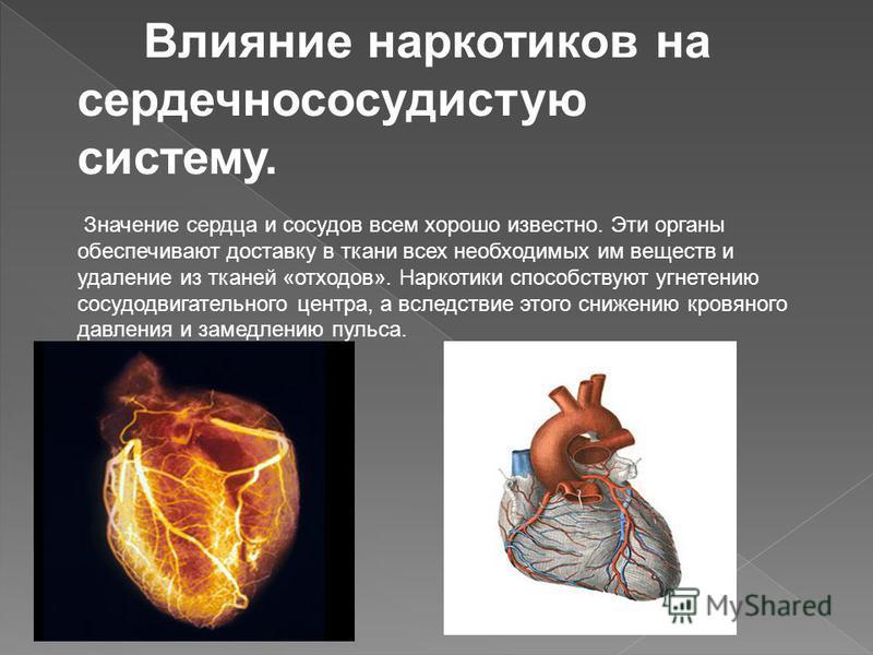 Влияние наркотиков на сердечно сосудистую систему. Значение сердца и сосудов всем хорошо известно. Эти органы обеспечивают доставку в ткани всех необходимых им веществ и удаление из тканей «отходов». Наркотики способствуют угнетению сосудодвигательно