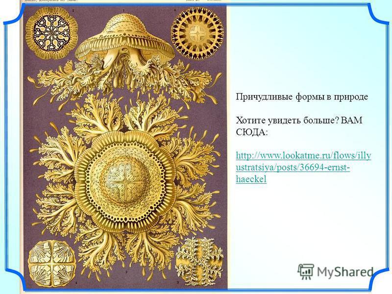 Причудливые формы в природе Хотите увидеть больше? ВАМ СЮДА: http://www.lookatme.ru/flows/illy ustratsiya/posts/36694-ernst- haeckel