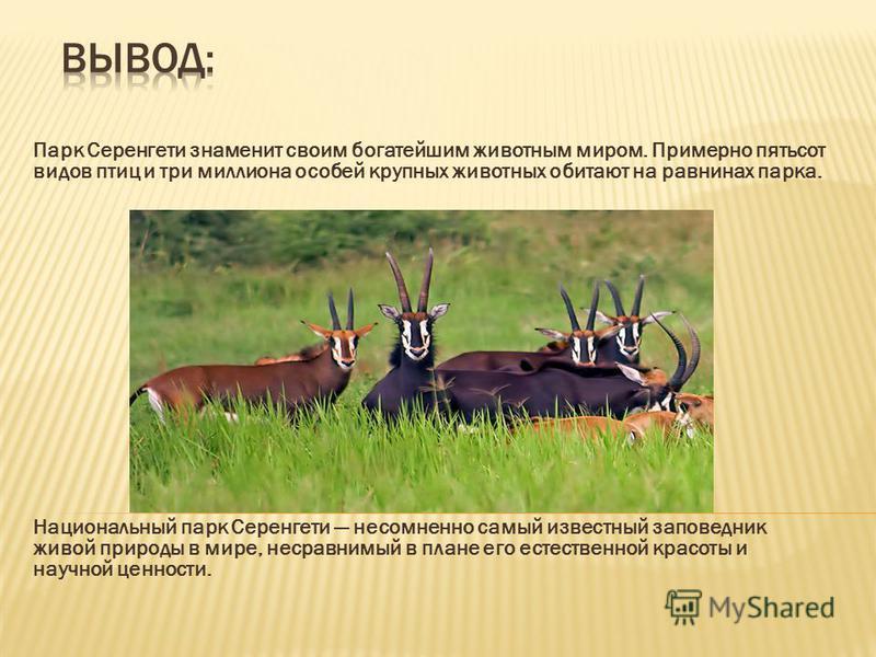Парк Серенгети знаменит своим богатейшим животным миром. Примерно пятьсот видов птиц и три миллиона особей крупных животных обитают на равнинах парка. Национальный парк Серенгети несомненно самый известный заповедник живой природы в мире, несравнимый