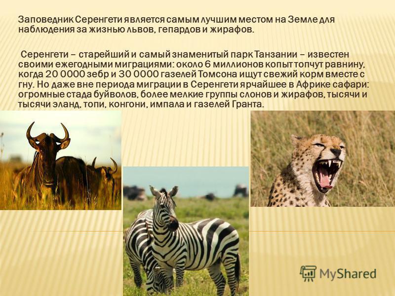 Заповедник Серенгети является самым лучшим местом на Земле для наблюдения за жизнью львов, гепардов и жирафов. Серенгети – старейший и самый знаменитый парк Танзании – известен своими ежегодными миграциями: около 6 миллионов копыт топчут равнину, ког