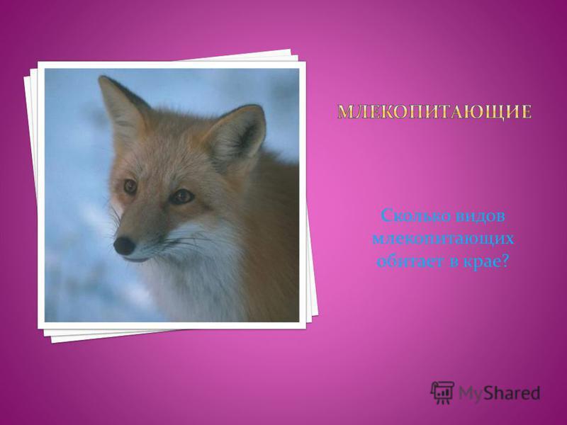 Сколько видов млекопитающих обитает в крае?