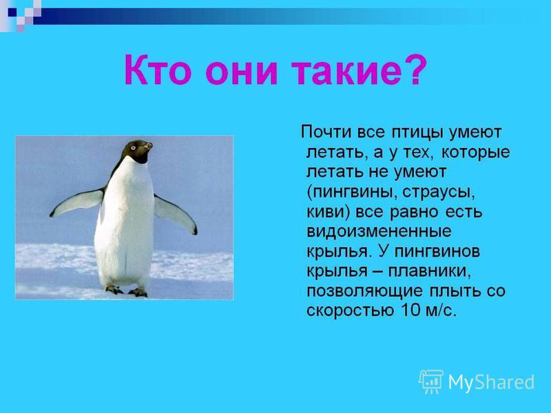 Биология 10 класс с пингвинами