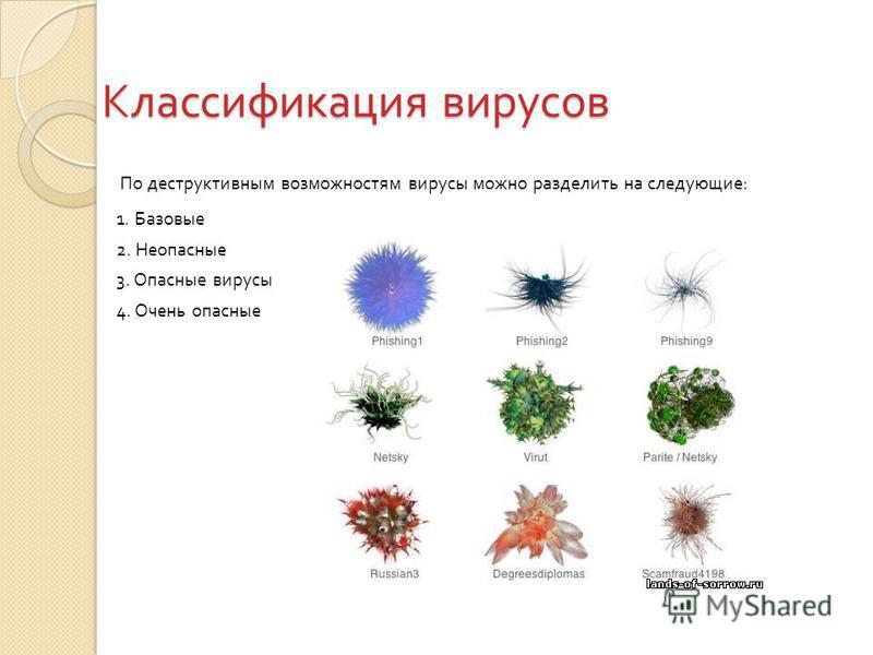 Классификация вирусов По деструктивным возможностям вирусы можно разделить на следующие : 1. Базовые 2. Неопасные 3. Опасные вирусы 4. Очень опасные