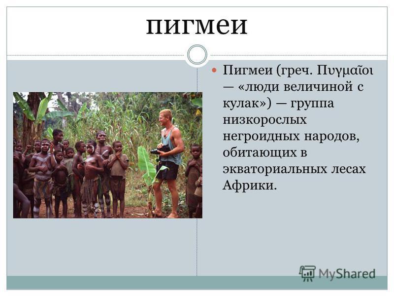 пигмеи Пигмеи (греч. Πυγμα οι «люди величиной с кулак») группа низкорослых негроидных народов, обитающих в экваториальных лесах Африки.