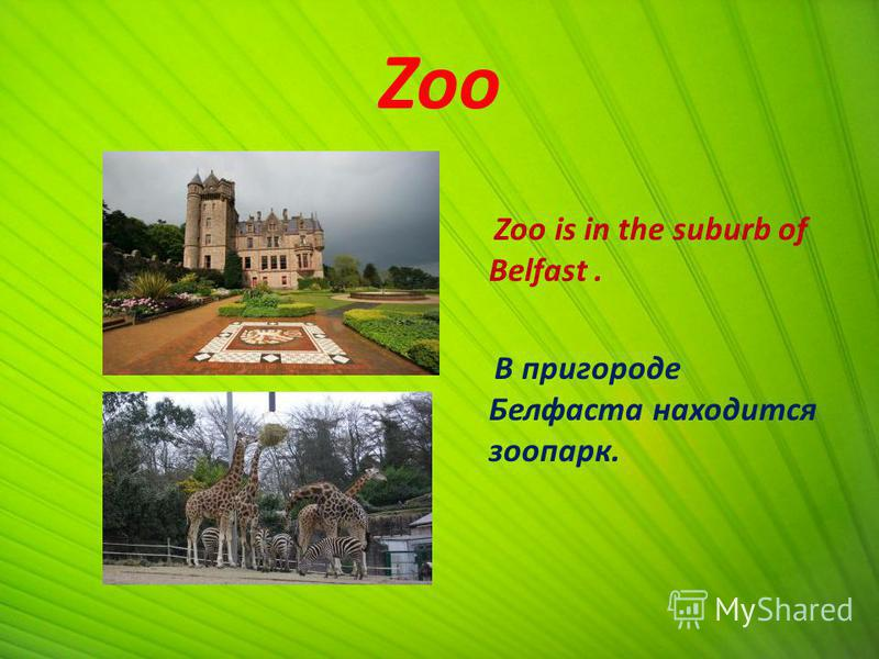 Zoo Zoo is in the suburb of Belfast. В пригороде Белфаста находится зоопарк.