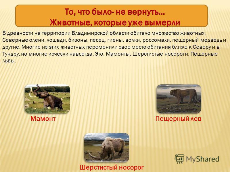 В древности на территории Владимирской области обитало множество животных: Северные олени, лошади, бизоны, песец, гиены, волки, росомахи, пещерный медведь и другие. Многие из этих животных переменили свое место обитания ближе к Северу и в Тундру, но
