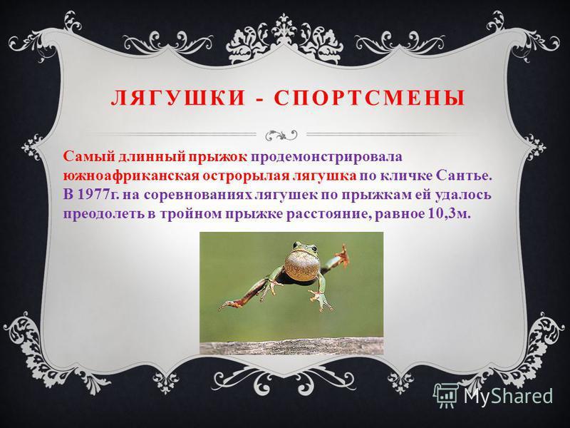 ЛЯГУШКИ - СПОРТСМЕНЫ Самый длинный прыжок продемонстрировала южноафриканская острорылая лягушка по кличке Сантье. В 1977 г. на соревнованиях лягушек по прыжкам ей удалось преодолеть в тройном прыжке расстояние, равное 10,3 м.