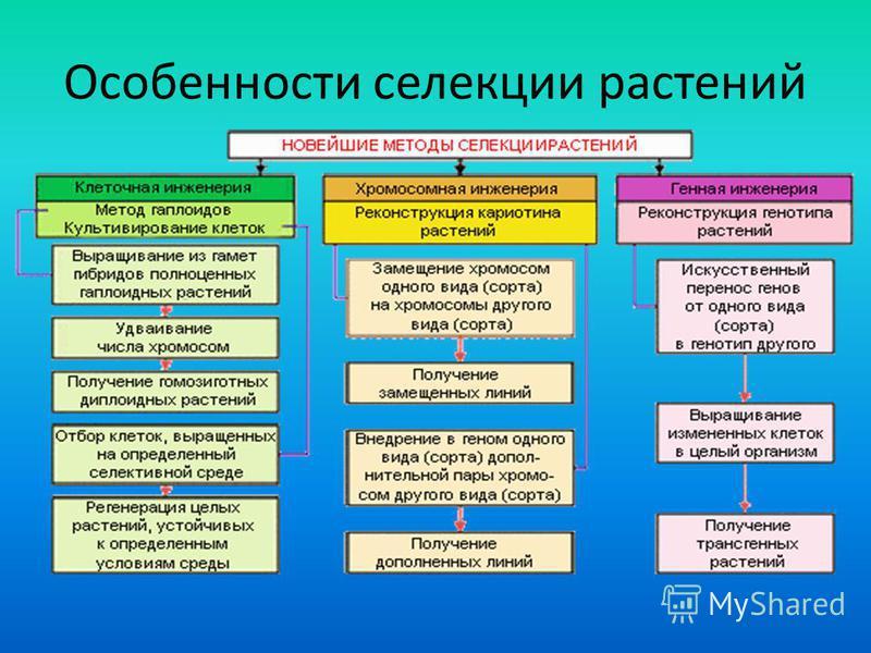 Особенности селекции растений