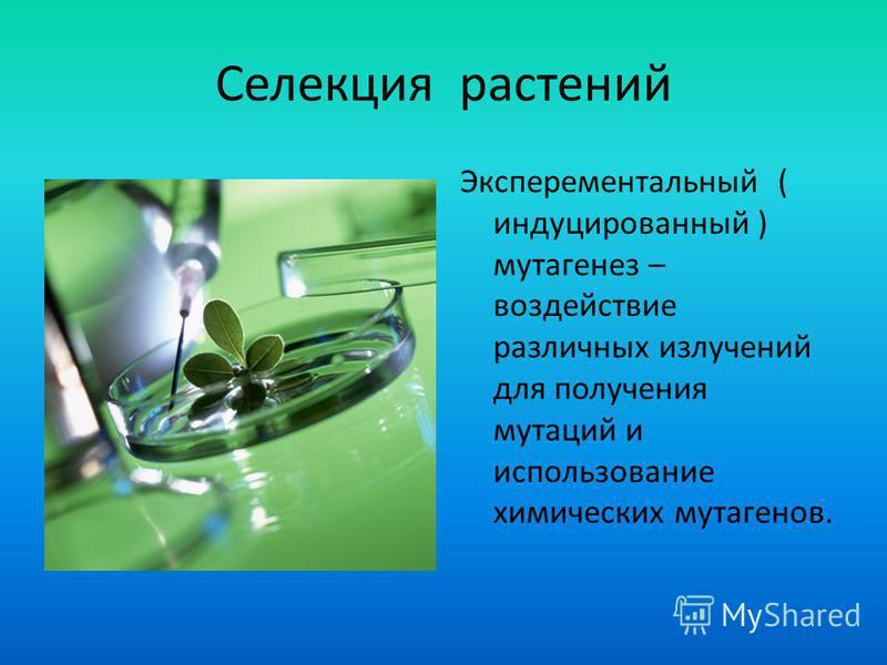 Селекция растений Эксперементальный ( индуцированный ) мутагенез – воздействие различных излучений для получения мутаций и использование химических мутагенов.