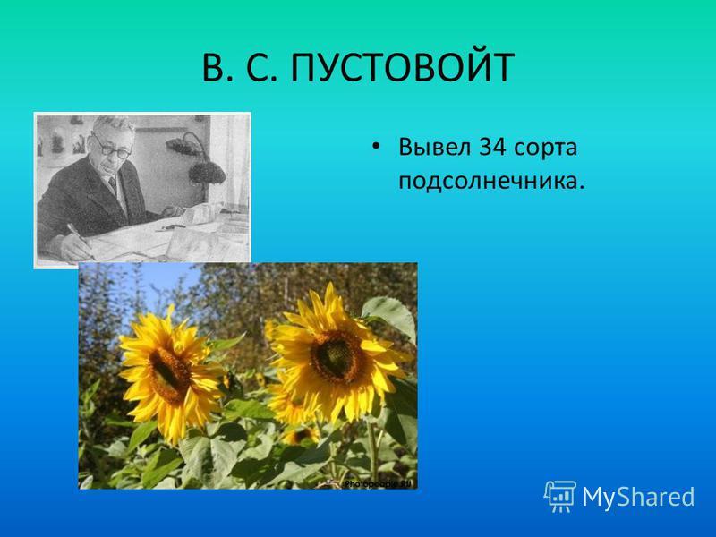 В. С. ПУСТОВОЙТ Вывел 34 сорта подсолнечника.
