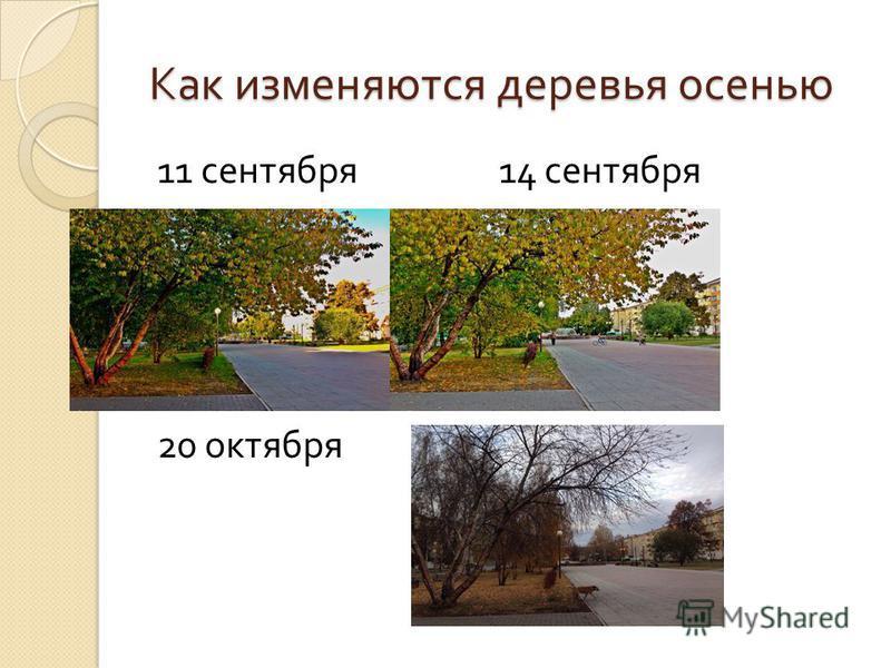 Как изменяются деревья осенью 11 сентября 14 сентября 20 октября