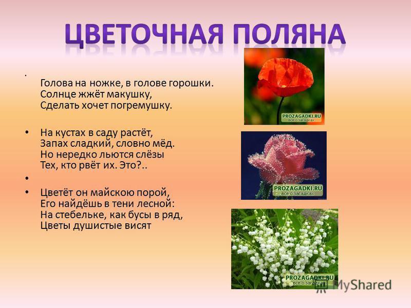 Голова на ножке, в голове горошки. Солнце жжёт макушку, Сделать хочет погремушку. На кустах в саду растёт, Запах сладкий, словно мёд. Но нередко льются слёзы Тех, кто рвёт их. Это?.. Цветёт он майскою порой, Его найдёшь в тени лесной: На стебельке, к