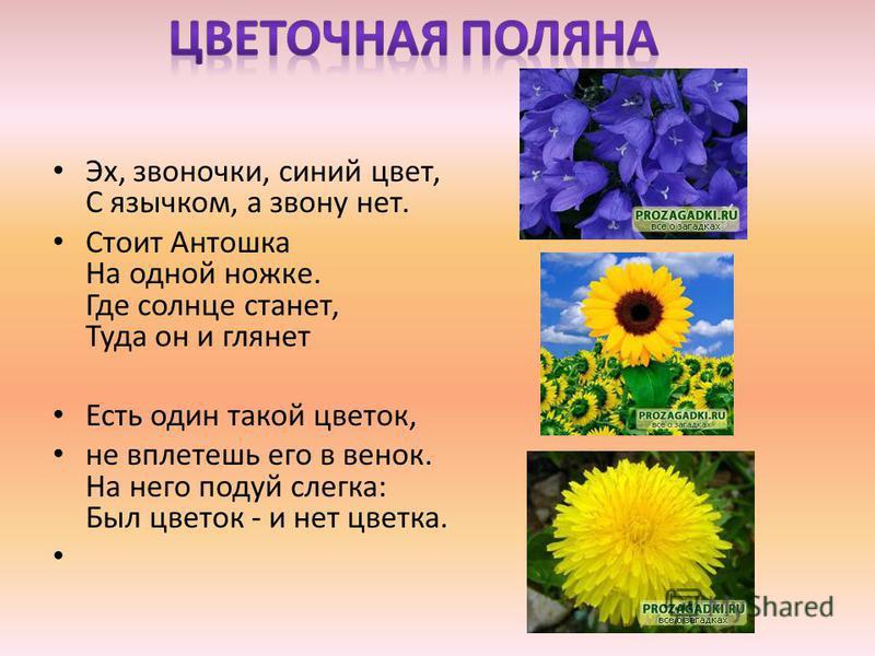 Эх, звоночки, синий цвет, С язычком, а звону нет. Стоит Антошка На одной ножке. Где солнце станет, Туда он и глянет Есть один такой цветок, не вплетешь его в венок. На него подуй слегка: Был цветок - и нет цветка.