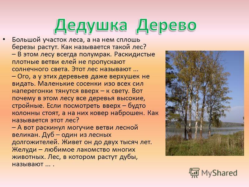 Большой участок леса, а на нем сплошь березы растут. Как называется такой лес? – В этом лесу всегда полумрак. Раскидистые плотные ветви елей не пропускают солнечного света. Этот лес называют... – Ого, а у этих деревьев даже верхушек не видать. Малень