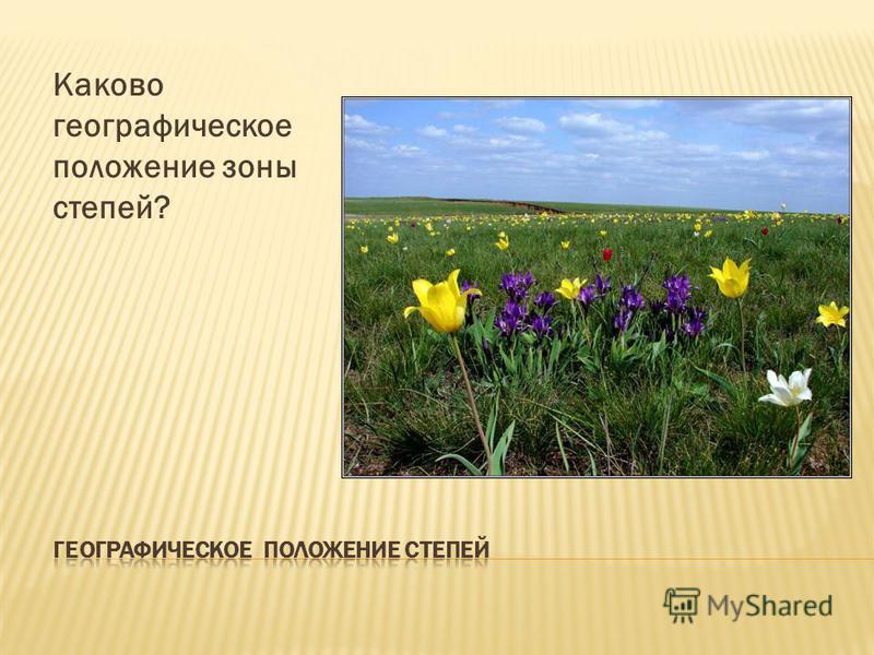 Каково географическое положение зоны степей?
