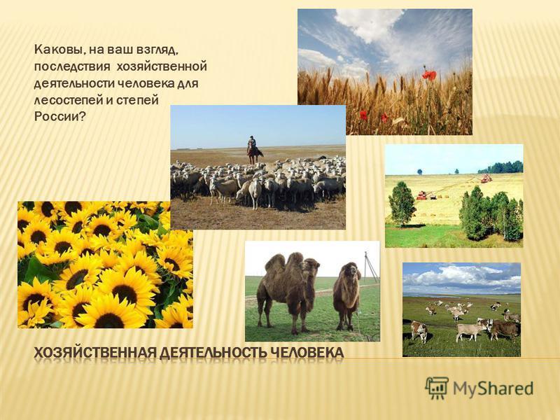Каковы, на ваш взгляд, последствия хозяйственной деятельности человека для лесостепей и степей России?