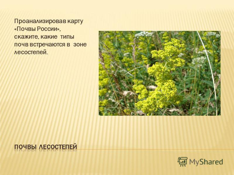 Проанализировав карту «Почвы России», скажите, какие типы почв встречаются в зоне лесостепей.
