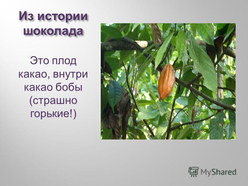 Из истории шоколада Это плод какао, внутри какао бобы ( страшно горькие !)