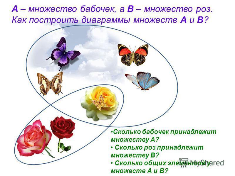 А – множество бабочек, а В – множество роз. Как построить диаграммы множеств А и В? Сколько бабочек принадлежит множеству А? Сколько роз принадлежит множеству В? Сколько общих элементов у множеств А и В?