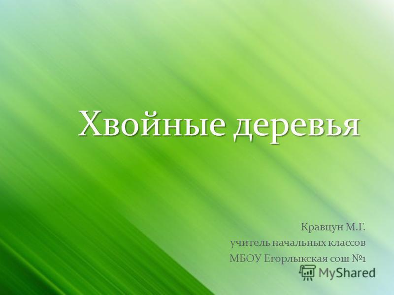 Хвойные деревья Кравцун М.Г. учитель начальных классов МБОУ Егорлыкская сош 1