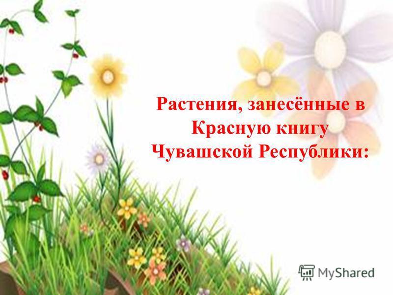 Растения, занесённые в Красную книгу Чувашской Республики: