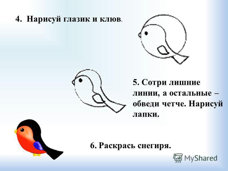 6. Раскрась снегиря. 4. Нарисуй глазик и клюв. 5. Сотри лишние линии, а остальные – обведи четче. Нарисуй лапки.