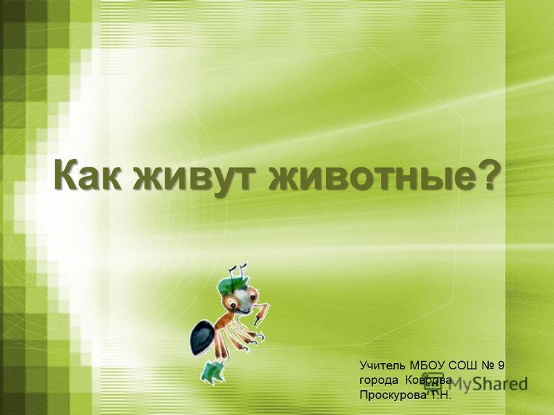 Как живут животные? Учитель МБОУ СОШ 9 города Коврова Проскурова Т.Н.