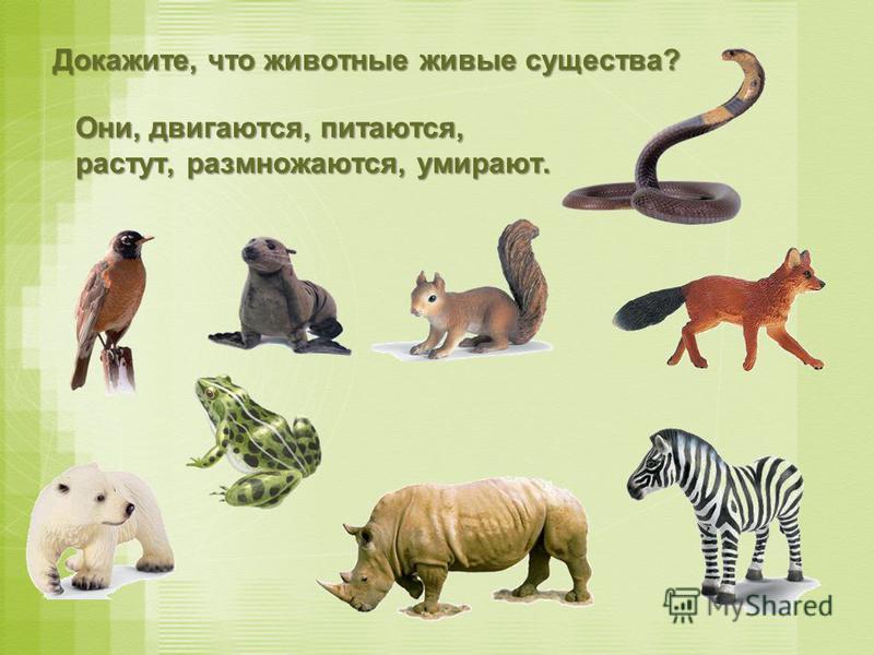 Докажите, что животные живые существа? О ОО Они, двигаются, питаются, растут, размножаются, умирают.