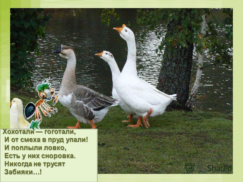 Хохотали гоготали, И от смеха в пруд упали! И от смеха в пруд упали! И поплыли ловко, И поплыли ловко, Есть у них сноровка. Есть у них сноровка. Никогда не трусят Никогда не трусят Забияки…! Забияки…!