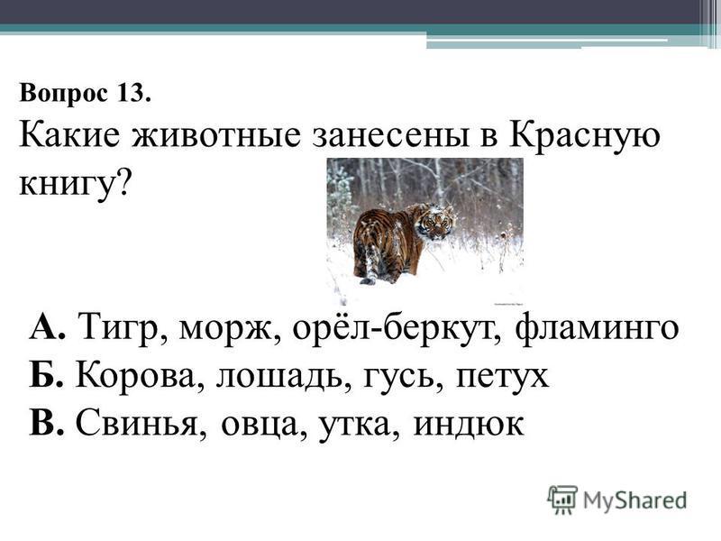 Вопрос 13. Какие животные занесены в Красную книгу? А. Тигр, морж, орёл-беркут, фламинго Б. Корова, лошадь, гусь, петух В. Свинья, овца, утка, индюк