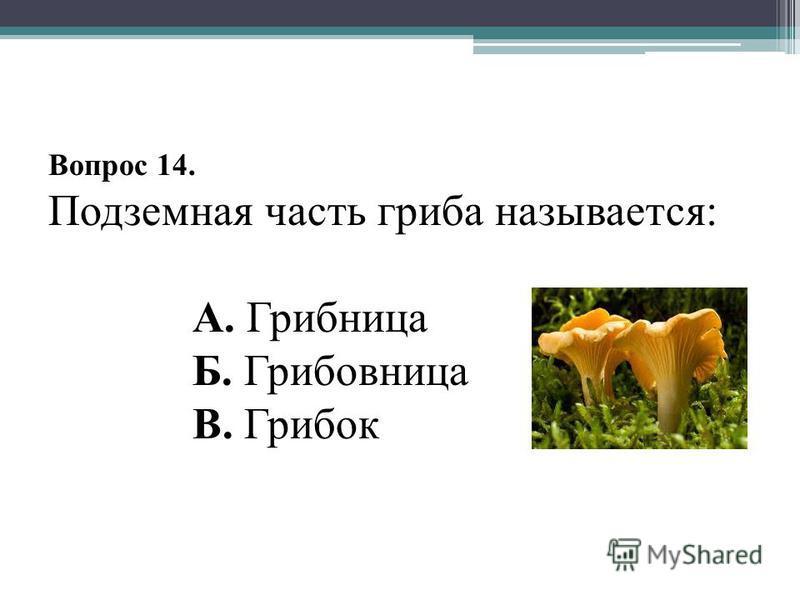 Вопрос 14. Подземная часть гриба называется: А. Грибница Б. Грибовница В. Грибок
