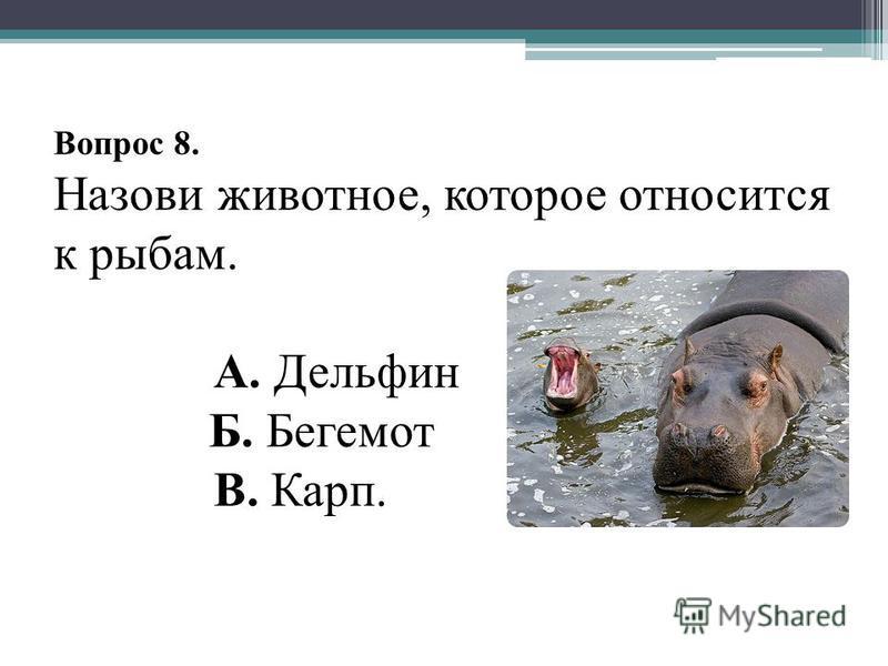 Вопрос 8. Назови животное, которое относится к рыбам. А. Дельфин Б. Бегемот В. Карп.