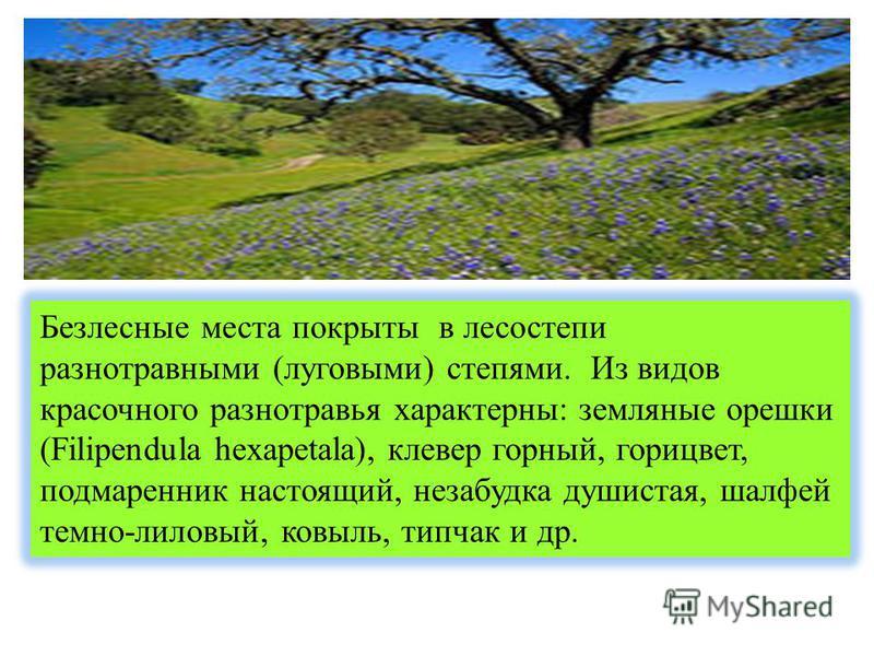 Безлесные места покрыты в лесостепи разнотравными (луговыми) степями. Из видов красочного разнотравья характерны: земляные орешки (Filipendula hexapetala), клевер горный, горицвет, подмаренник настоящий, незабудка душистая, шалфей темно-лиловый, ковы
